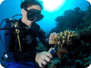 underwater ecologist kuwait